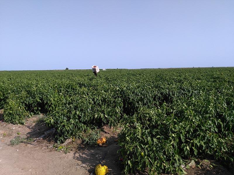 Mevsimlik-İşçi-Göçü-İletişim-Ağı